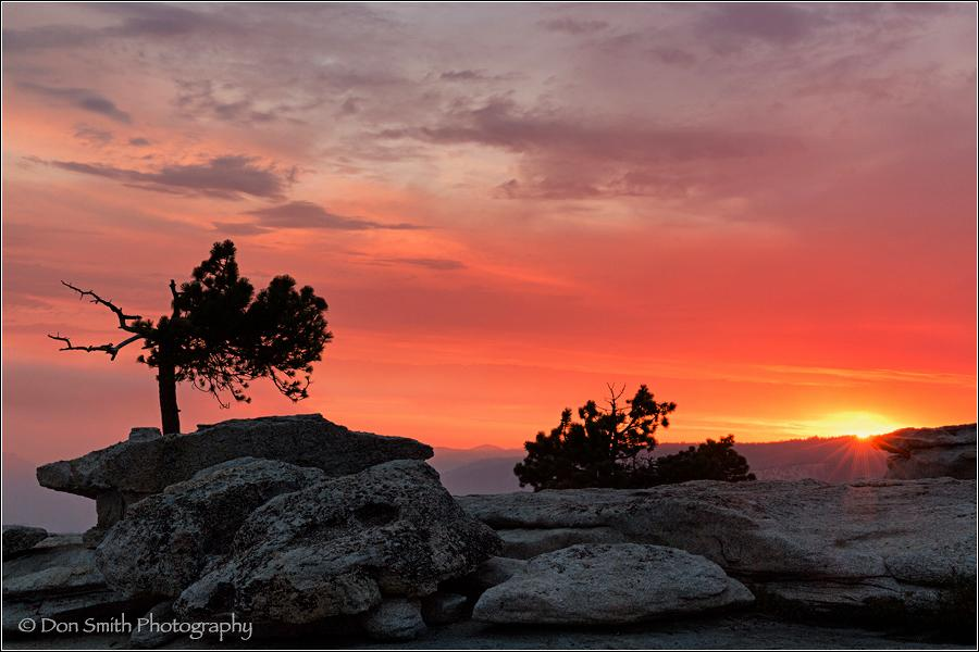 Bent Jeffrey Pine, Sentinel Dome Sunset