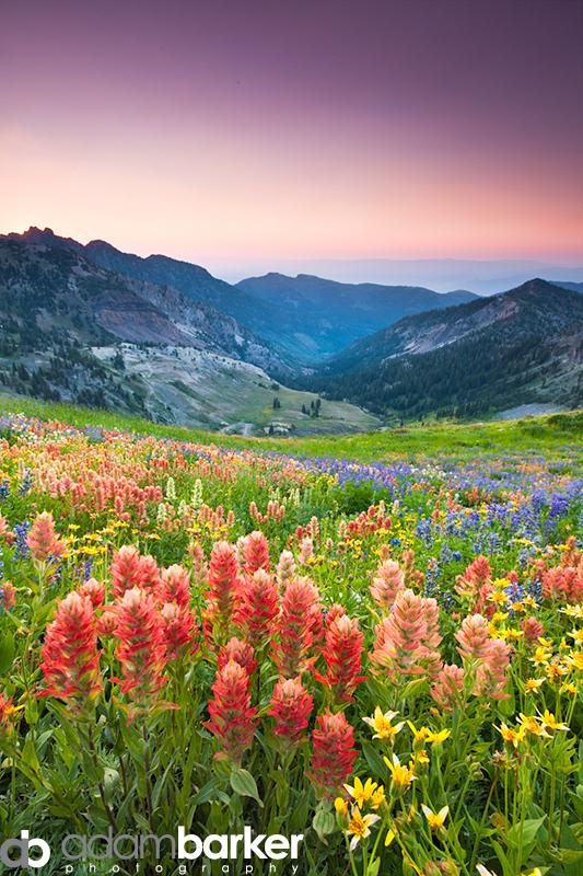 Adam barker - My approach to wildflower photography01