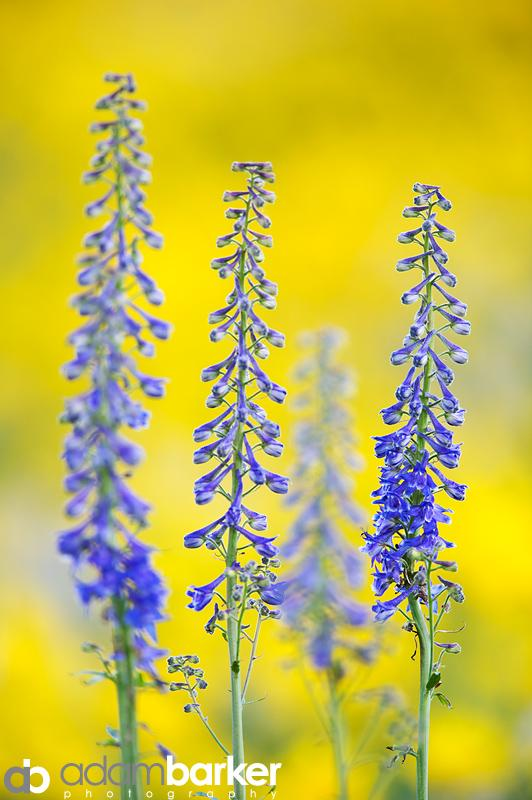 Adam barker - My approach to wildflower photography06