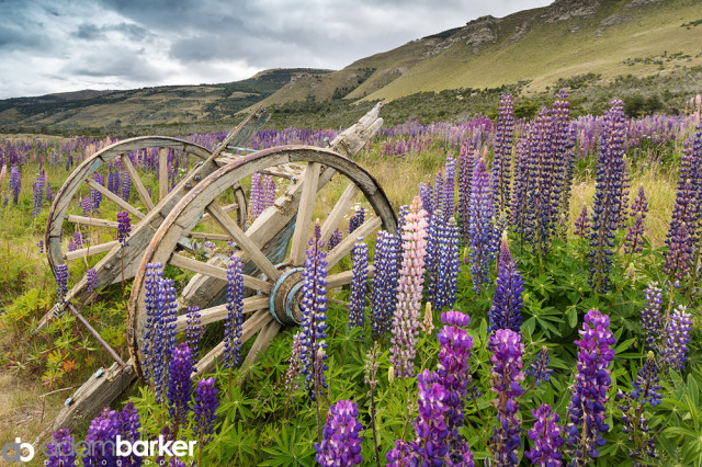 Adam barker - My approach to wildflower photography07