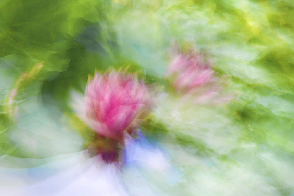 Flower Abstract 6543