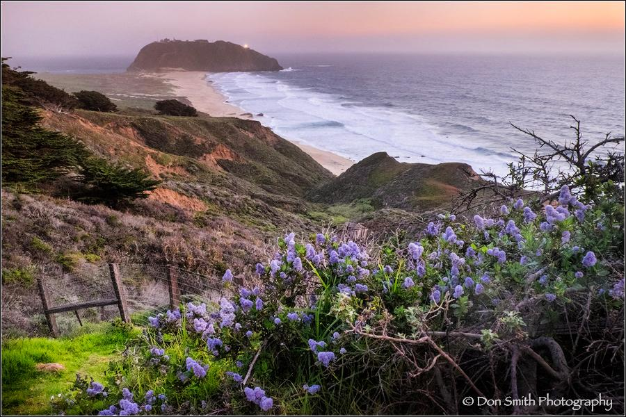 Wild Lilac and Pt. Sur Lightstation