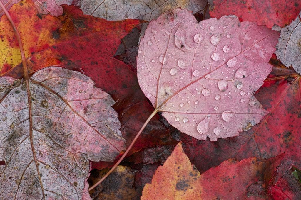 Tony Sweet-shooting Fall colors01