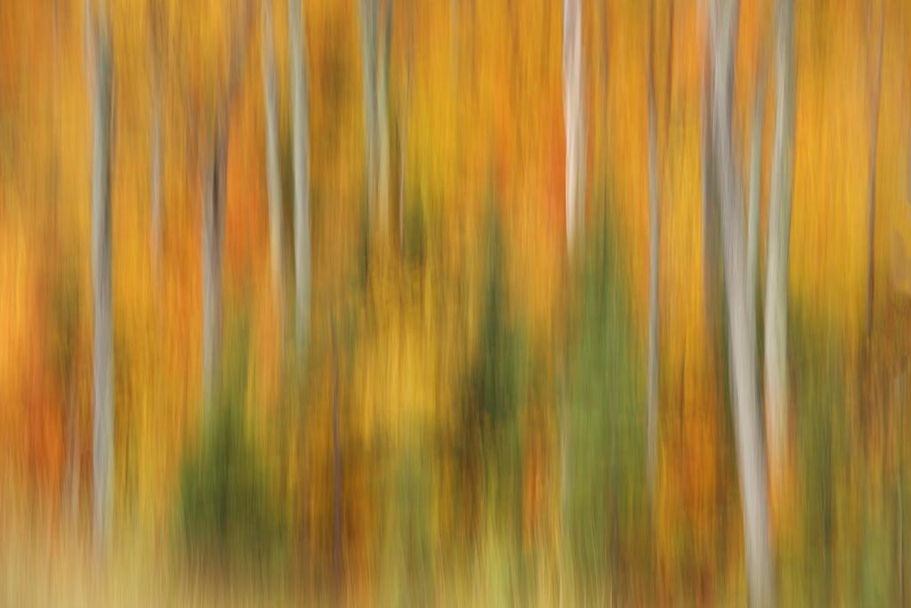 Tony Sweet-shooting Fall colors02