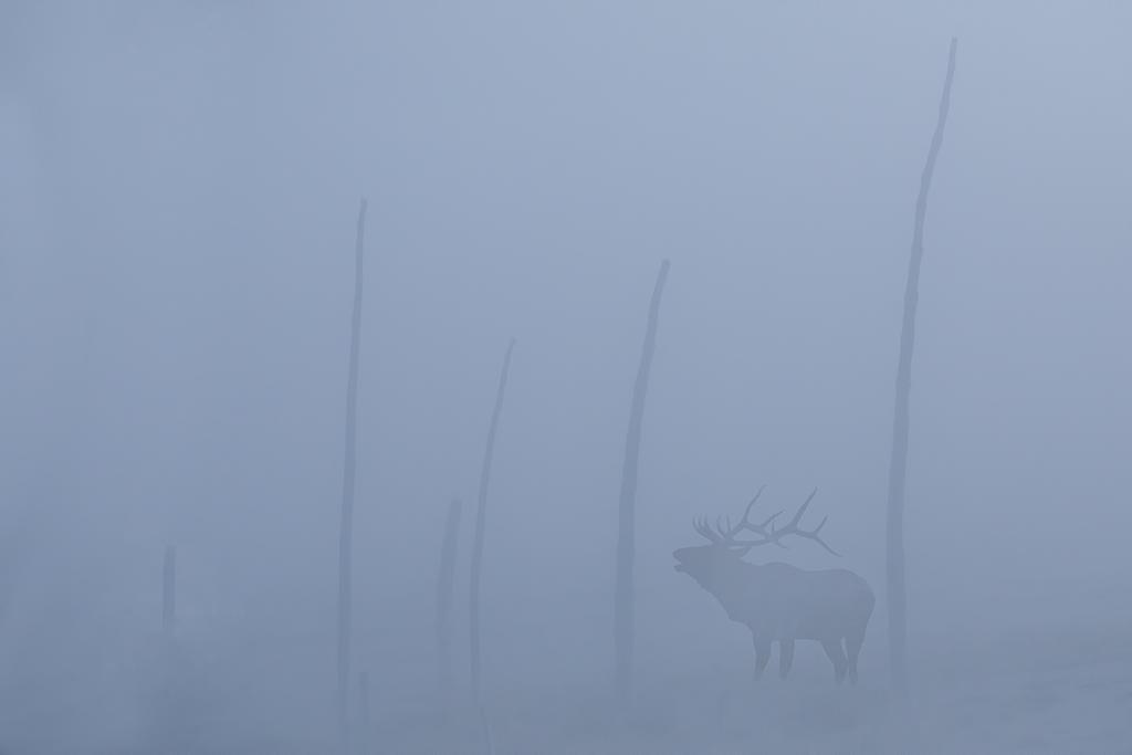 Elk 3382